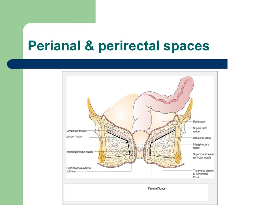 Perianal & perirectal spaces