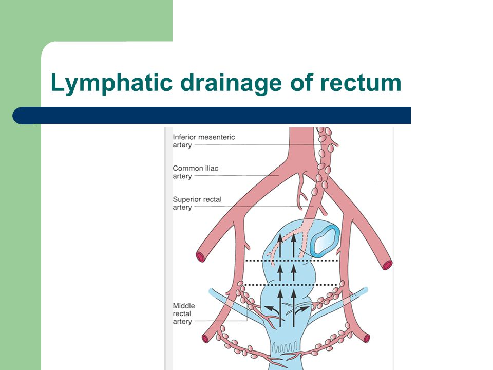 Lymphatic drainage of rectum