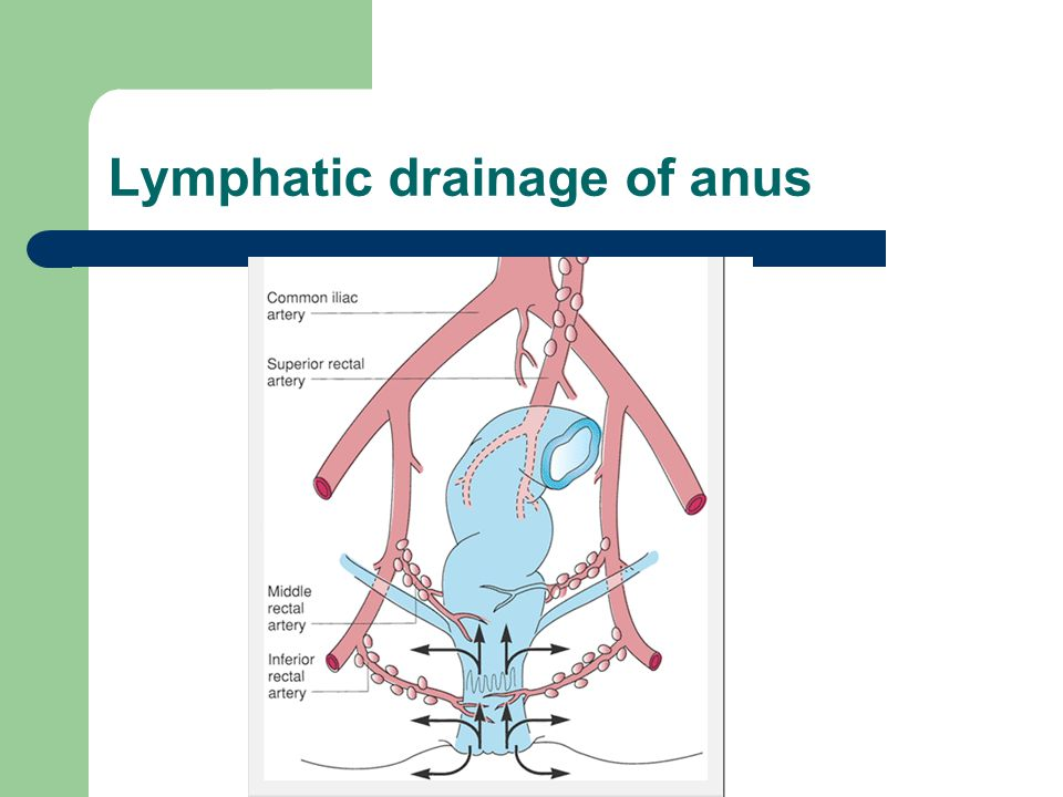 Lymphatic drainage of anus