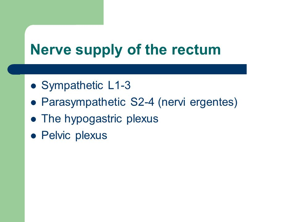 Nerve supply of the rectum