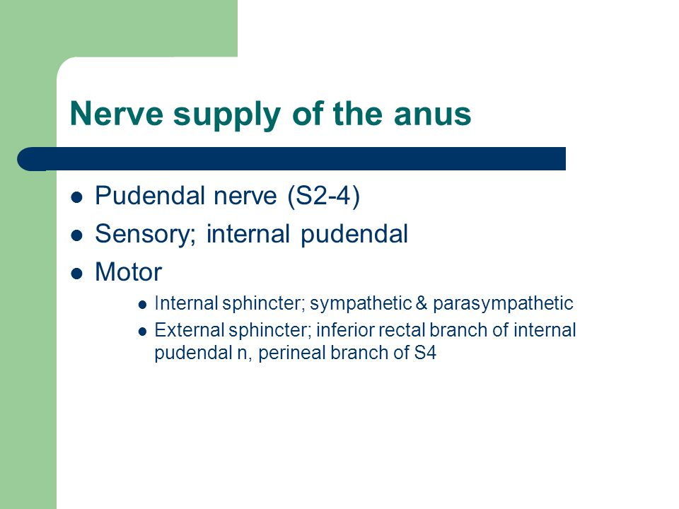 Nerve supply of the anus
