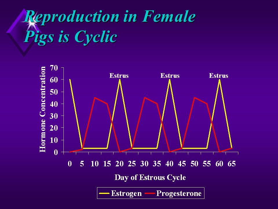 Reproduction in Female Pigs is Cyclic