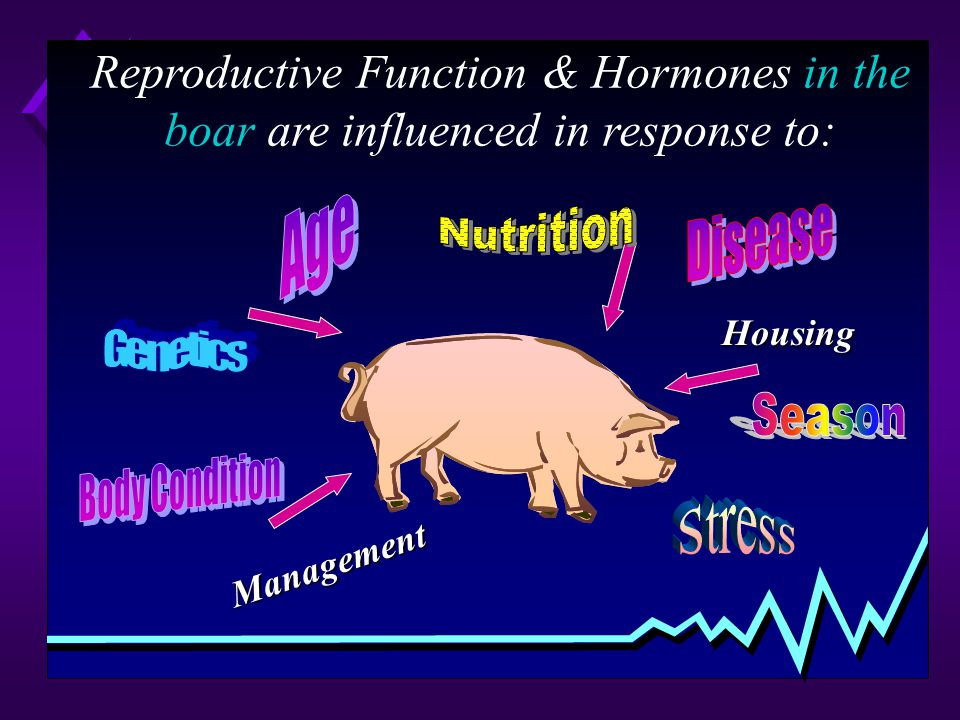 Reproductive Function & Hormones in the boar are influenced in response to: