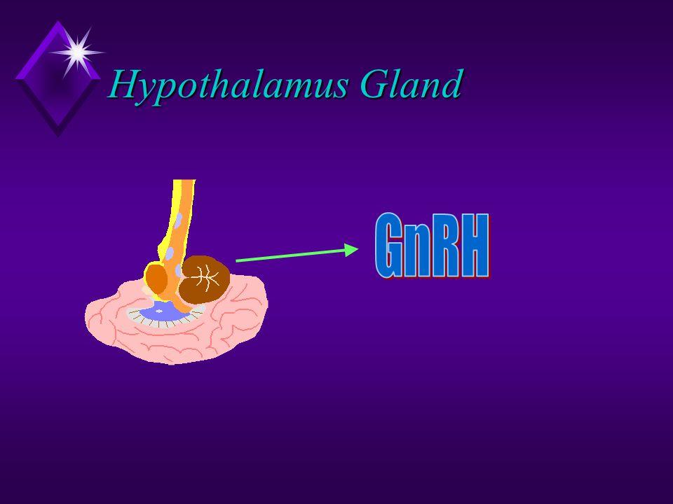 Hypothalamus Gland GnRH