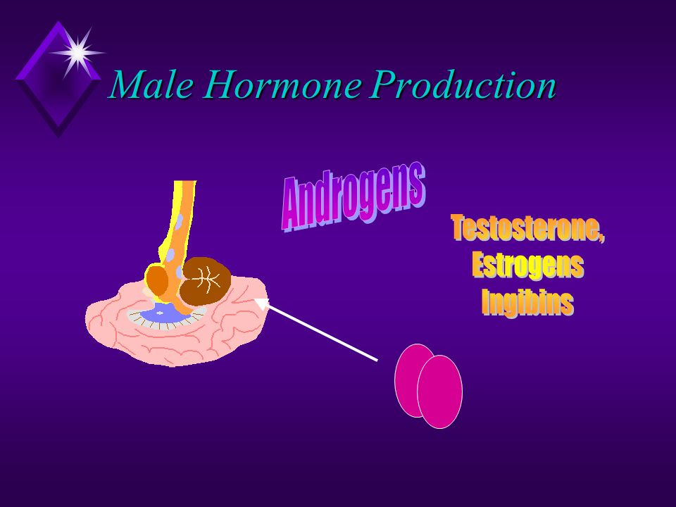 Male Hormone Production