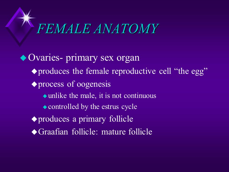 FEMALE ANATOMY Ovaries- primary sex organ