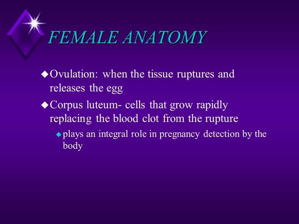 FEMALE ANATOMY Ovulation: when the tissue ruptures and releases the egg.