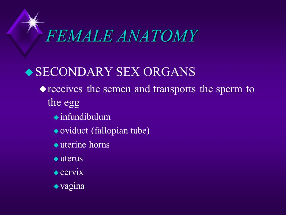 FEMALE ANATOMY SECONDARY SEX ORGANS