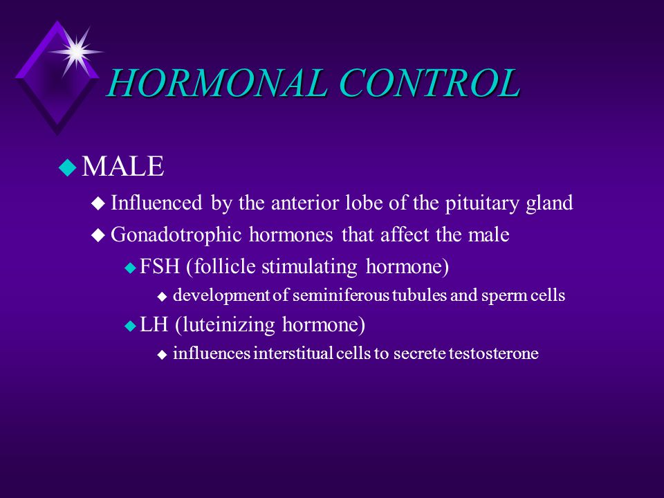 HORMONAL CONTROL MALE. Influenced by the anterior lobe of the pituitary gland. Gonadotrophic hormones that affect the male.