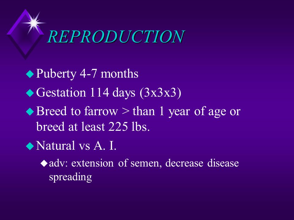 REPRODUCTION Puberty 4-7 months Gestation 114 days (3x3x3)