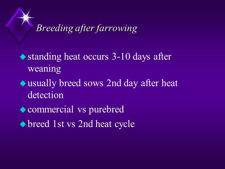 Breeding after farrowing