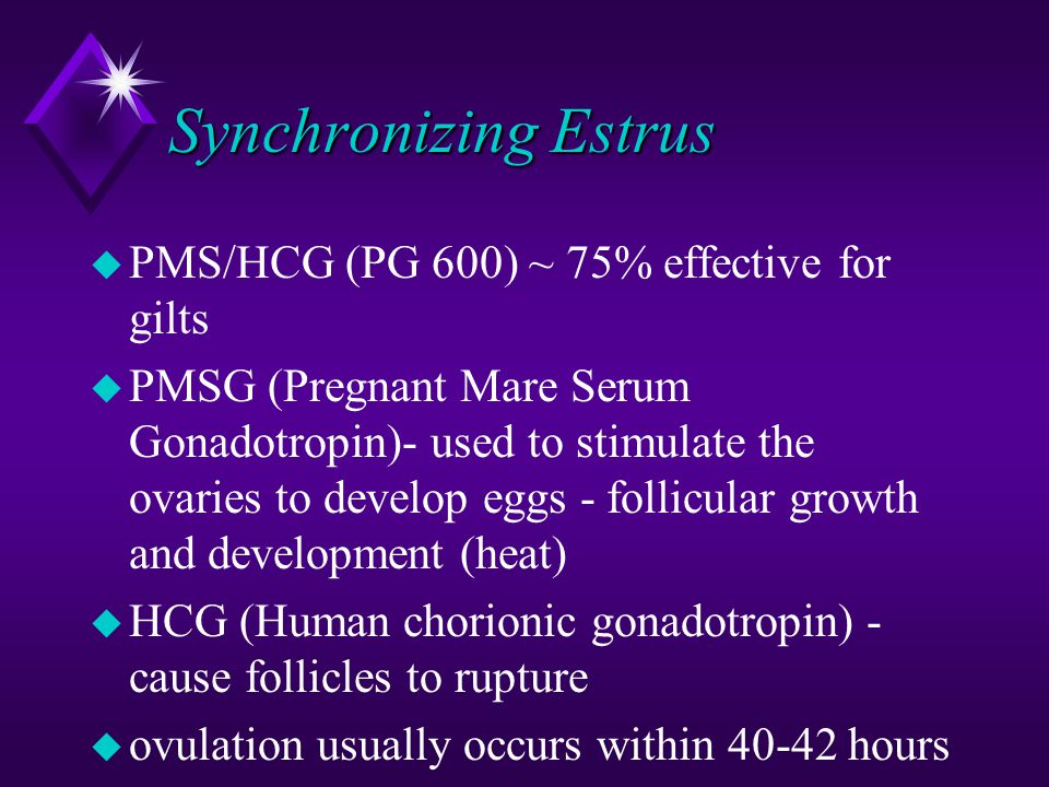 Synchronizing Estrus PMS/HCG (PG 600) ~ 75% effective for gilts