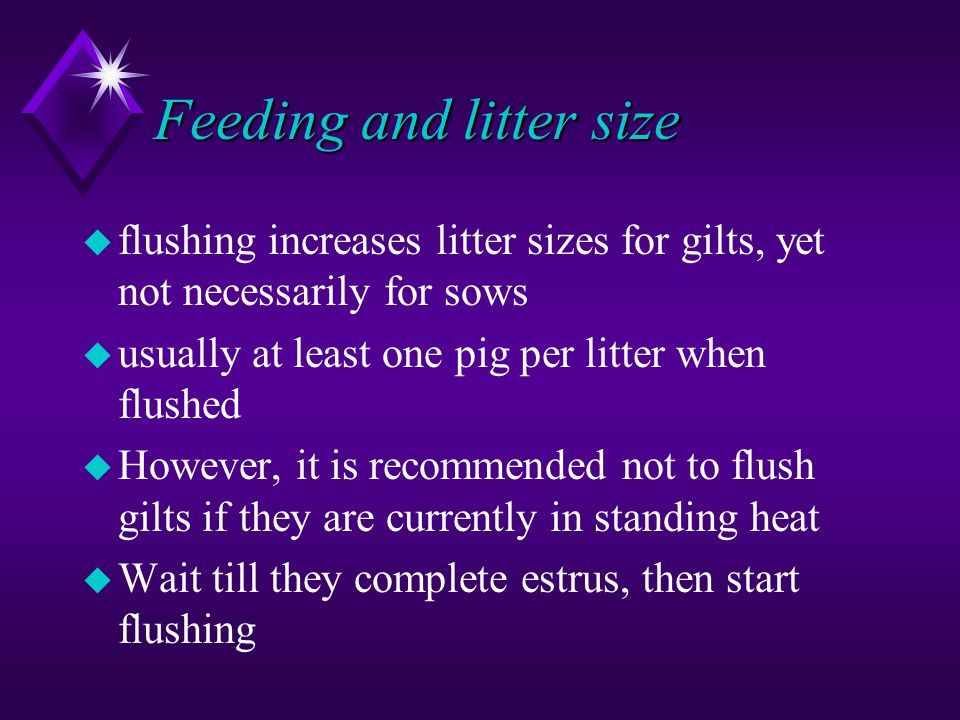 Feeding and litter size
