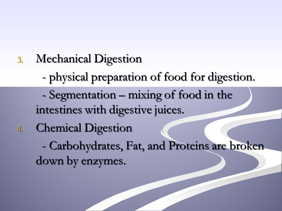 Mechanical Digestion - physical preparation of food for digestion. - Segmentation – mixing of food in the intestines with digestive juices.