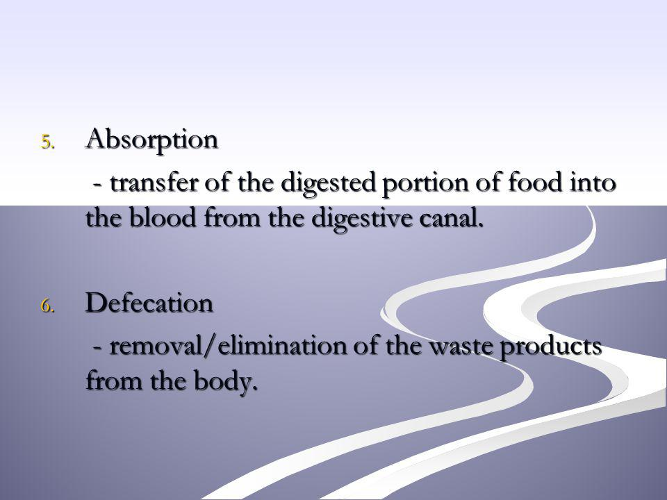 Absorption - transfer of the digested portion of food into the blood from the digestive canal. Defecation.