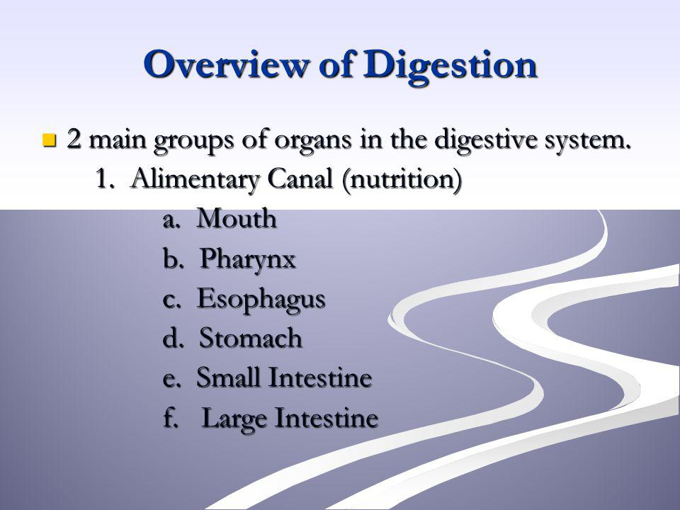 Overview of Digestion 2 main groups of organs in the digestive system.