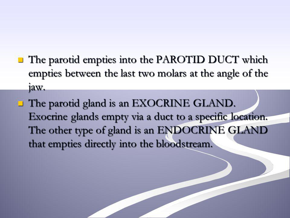 The parotid empties into the PAROTID DUCT which empties between the last two molars at the angle of the jaw.