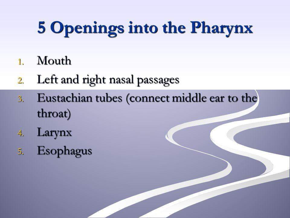 5 Openings into the Pharynx