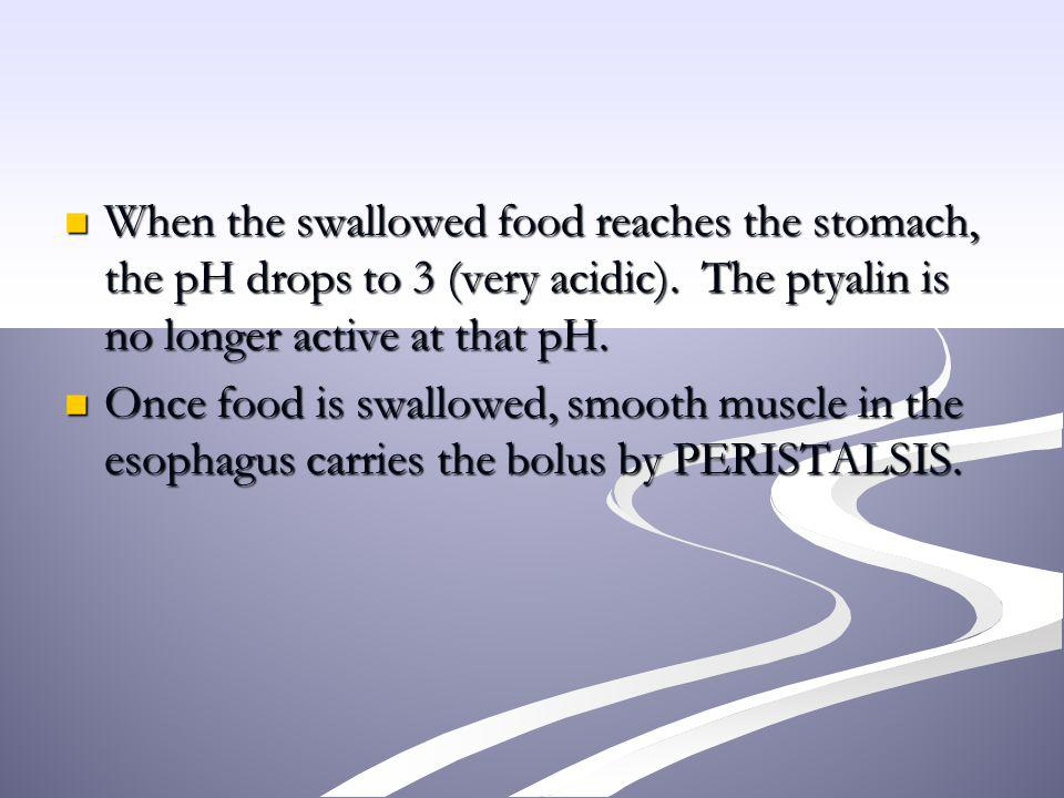 When the swallowed food reaches the stomach, the pH drops to 3 (very acidic). The ptyalin is no longer active at that pH.