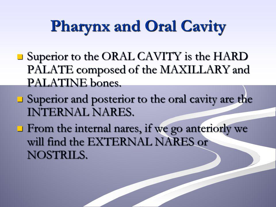 Pharynx and Oral Cavity