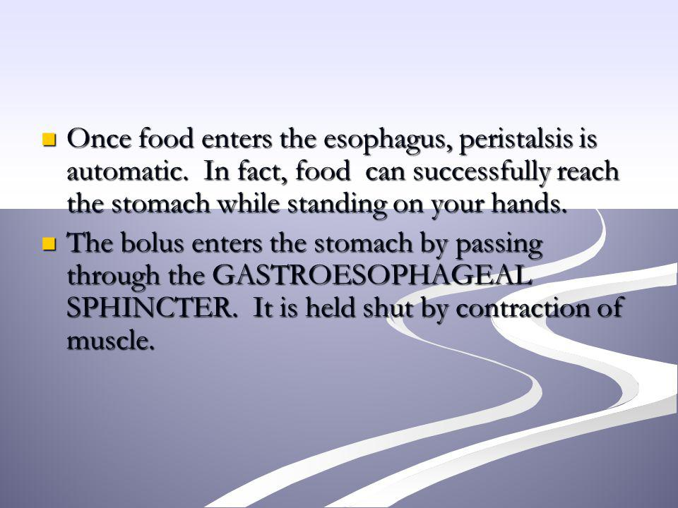 Once food enters the esophagus, peristalsis is automatic