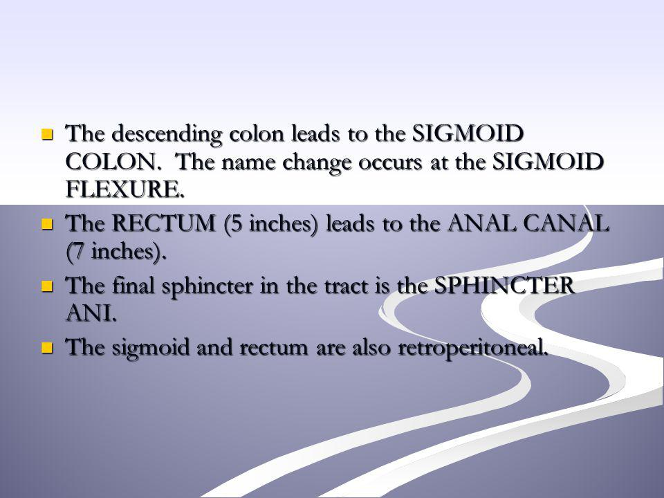 The descending colon leads to the SIGMOID COLON