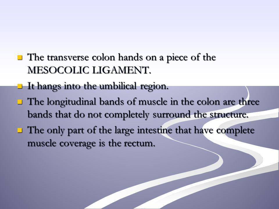 The transverse colon hands on a piece of the MESOCOLIC LIGAMENT.