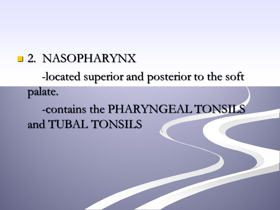 2. NASOPHARYNX -located superior and posterior to the soft palate.