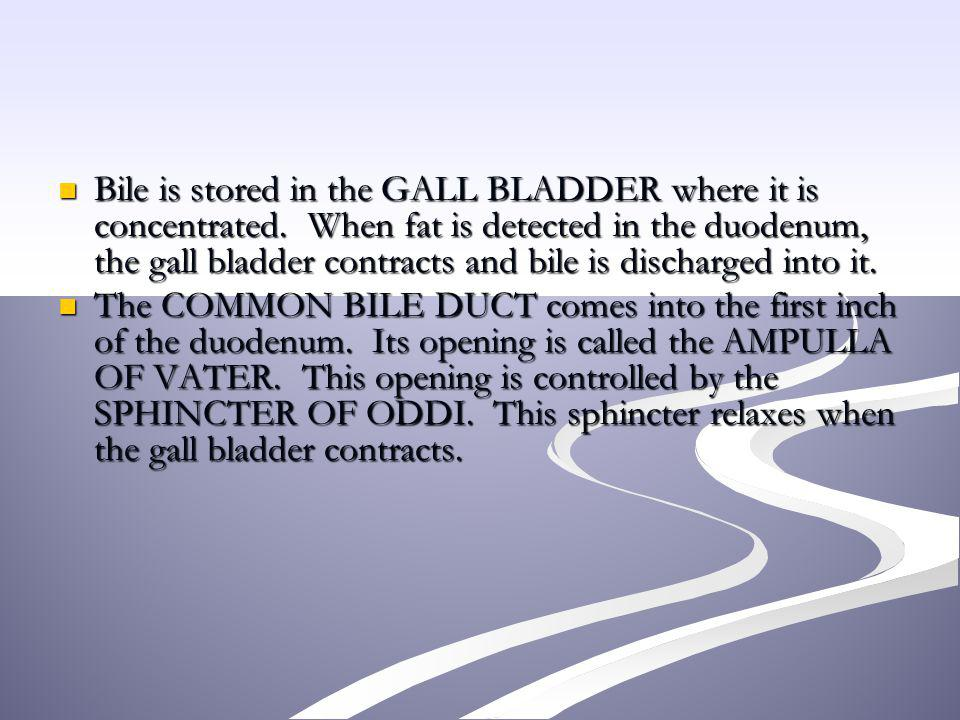 Bile is stored in the GALL BLADDER where it is concentrated