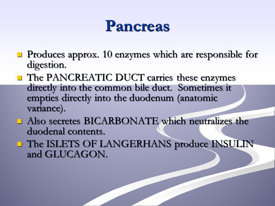 Pancreas Produces approx. 10 enzymes which are responsible for digestion.