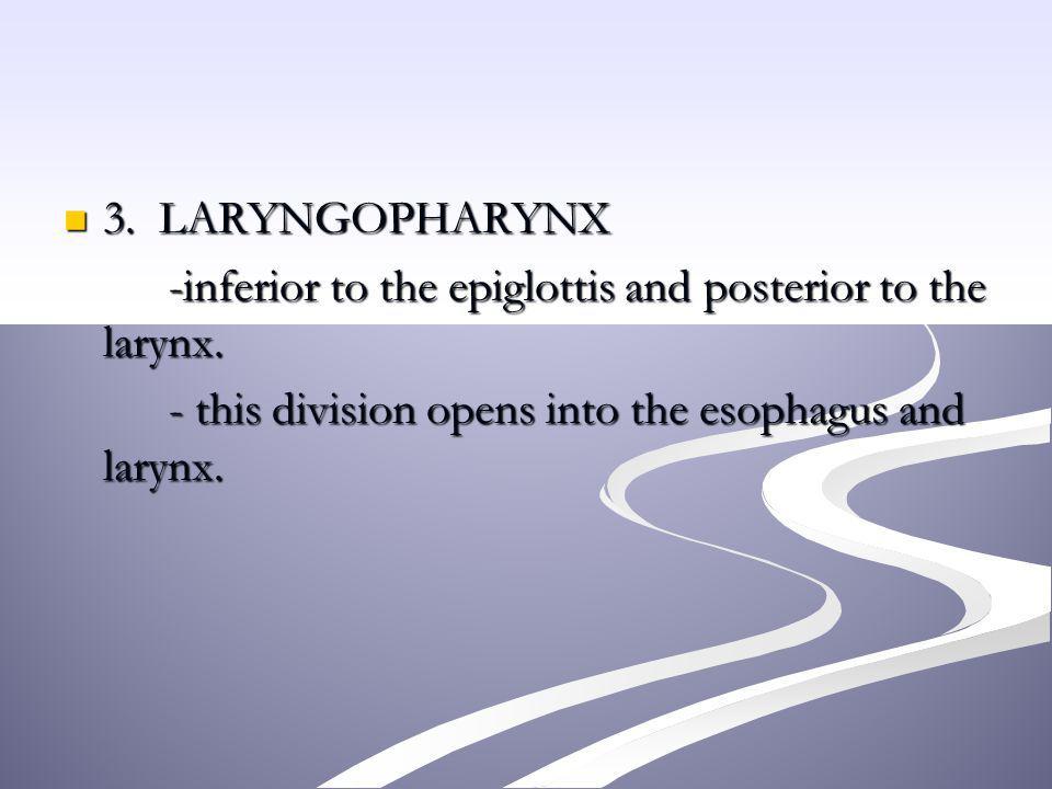 3. LARYNGOPHARYNX -inferior to the epiglottis and posterior to the larynx.