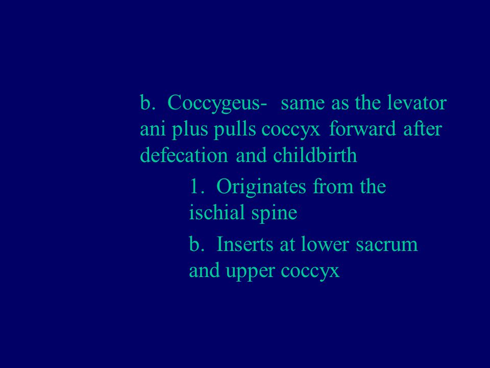 b. Coccygeus- same as the levator. ani plus pulls coccyx forward after