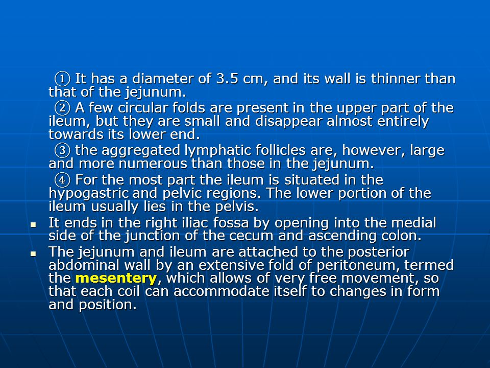 ① It has a diameter of 3.5 cm, and its wall is thinner than that of the jejunum.