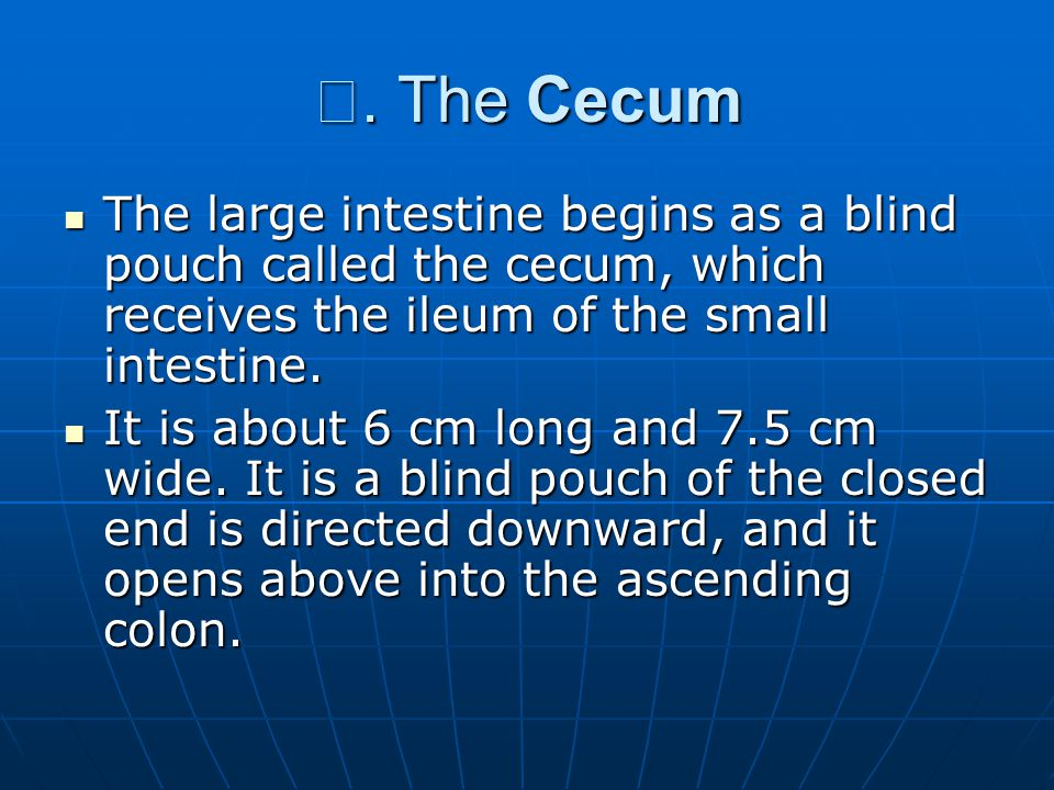 Ⅰ. The Cecum The large intestine begins as a blind pouch called the cecum, which receives the ileum of the small intestine.