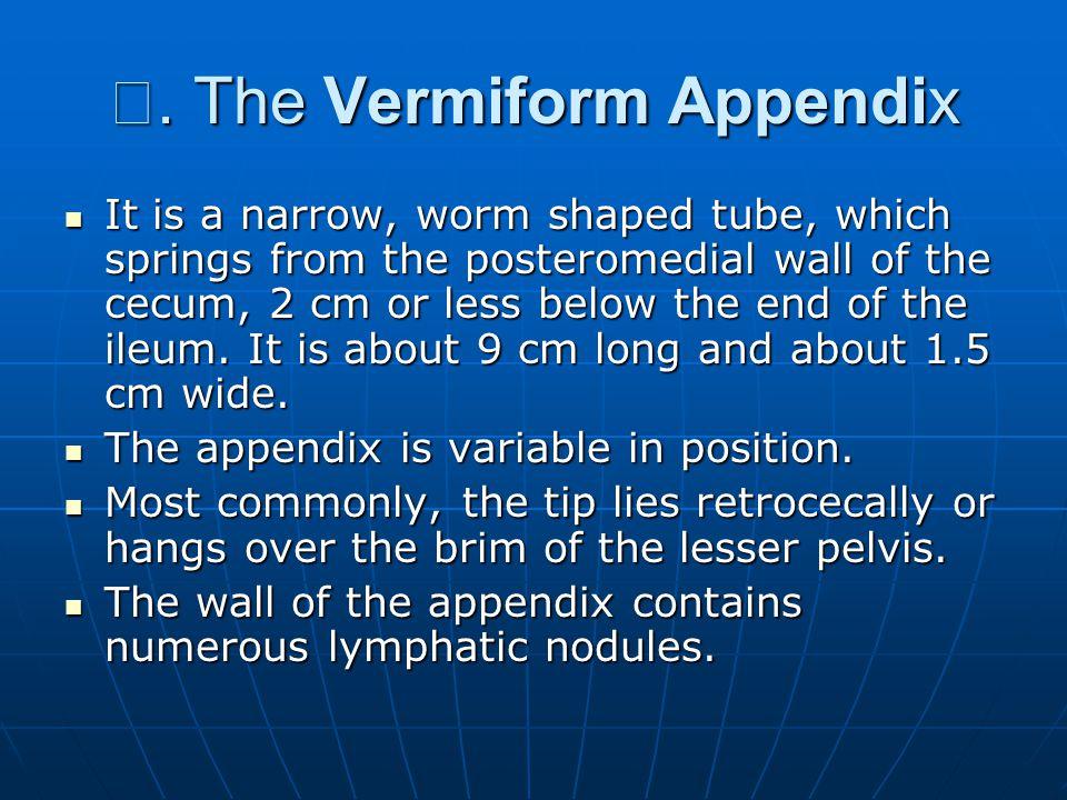 Ⅱ. The Vermiform Appendix