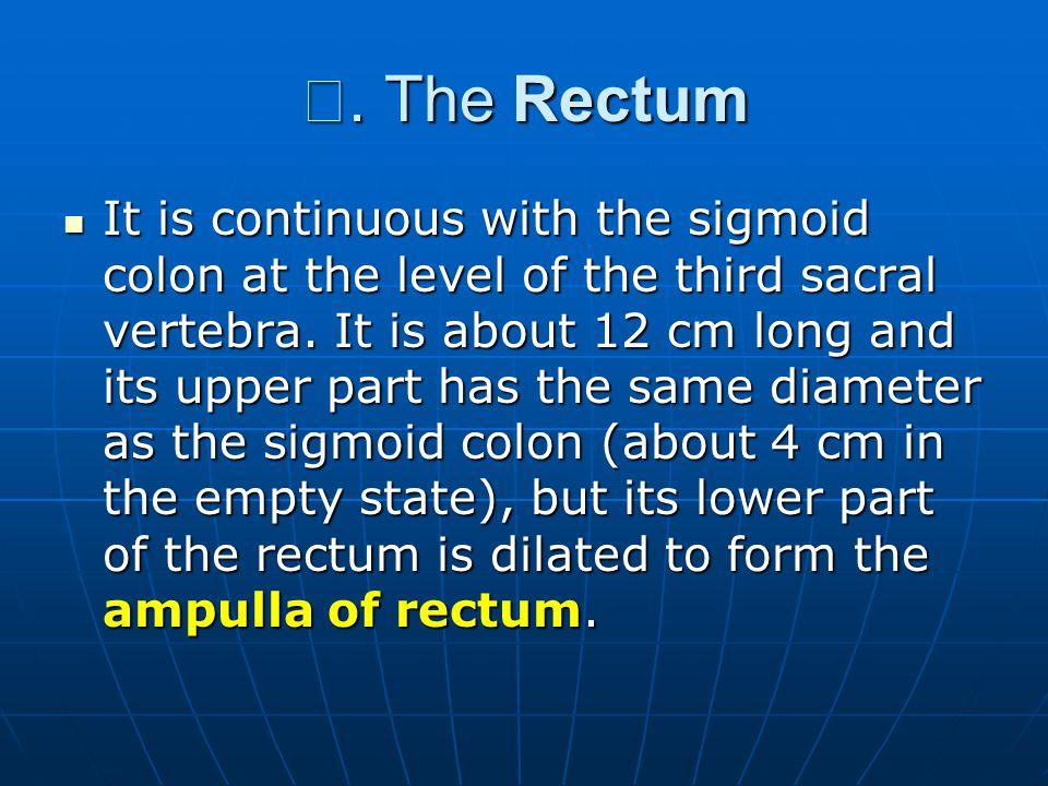 Ⅳ. The Rectum