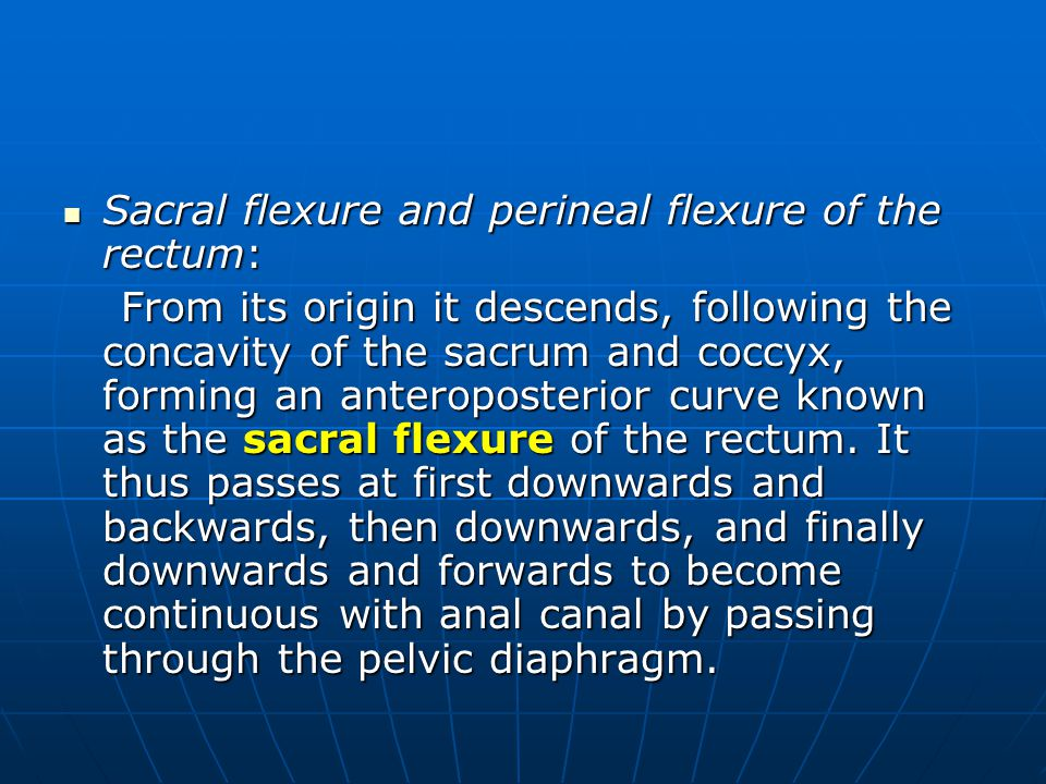Sacral flexure and perineal flexure of the rectum: