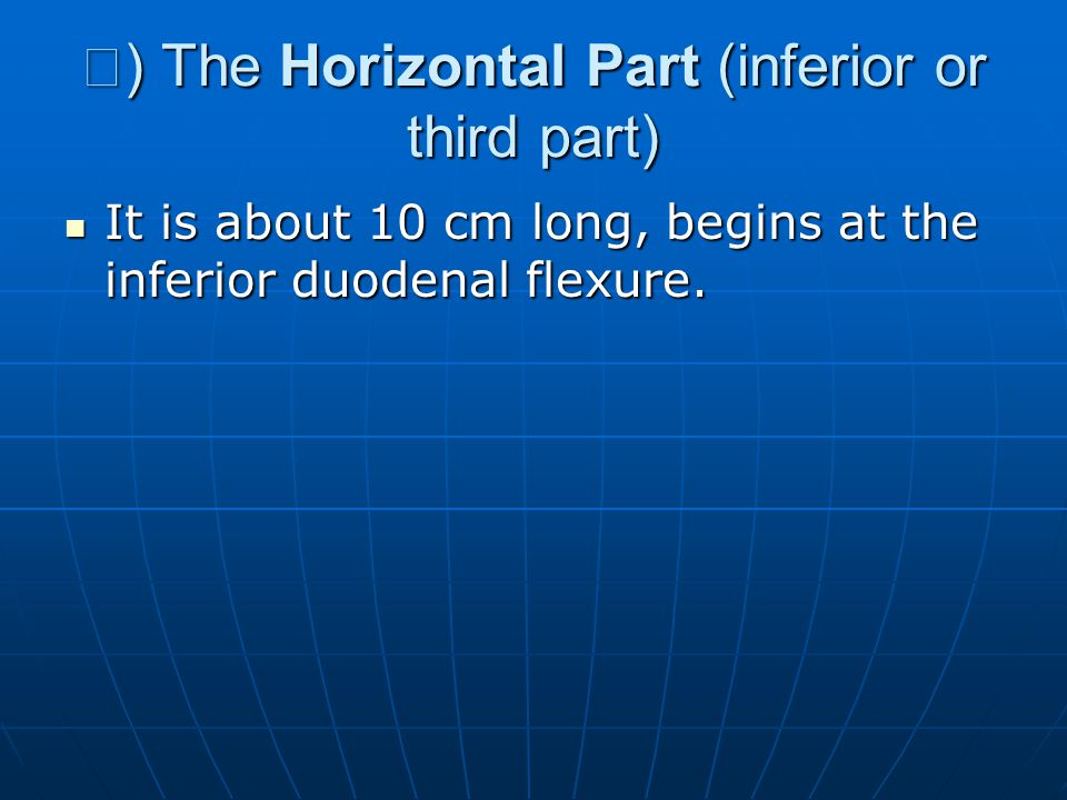 Ⅲ) The Horizontal Part (inferior or third part)