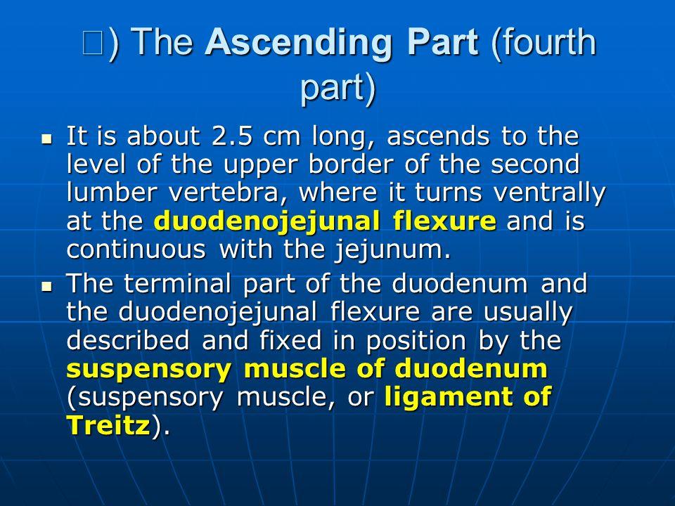 Ⅳ) The Ascending Part (fourth part)