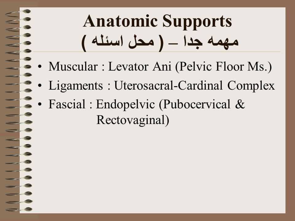 Anatomic Supports مهمه جدا – ( محل اسئله )