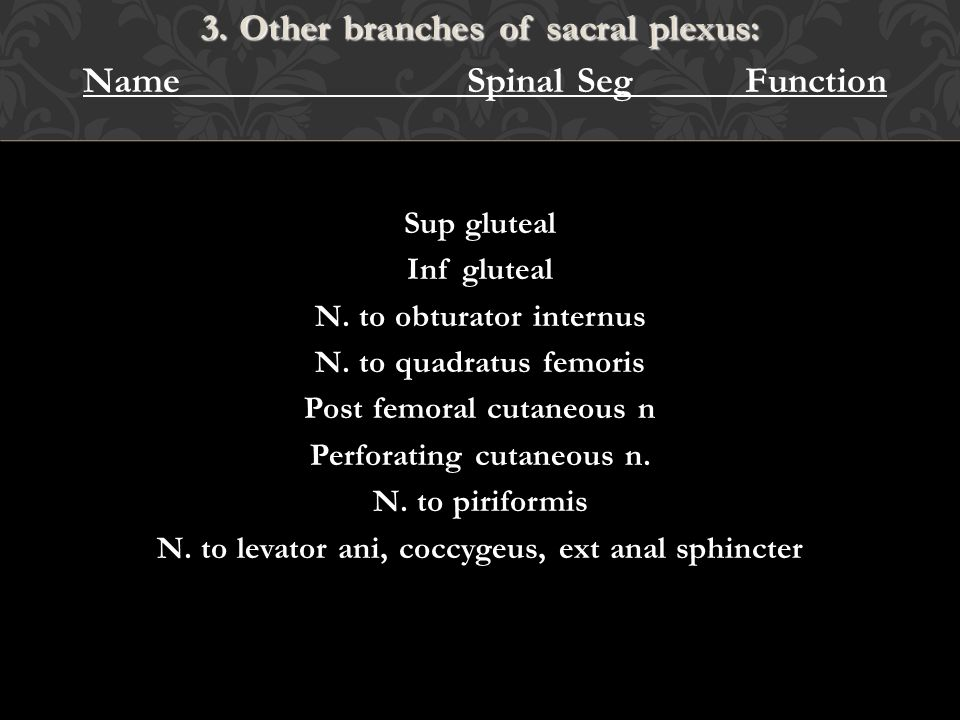 3. Other branches of sacral plexus: Name Spinal Seg Function
