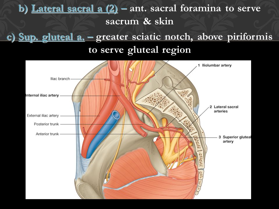 b) Lateral sacral a (2) – ant