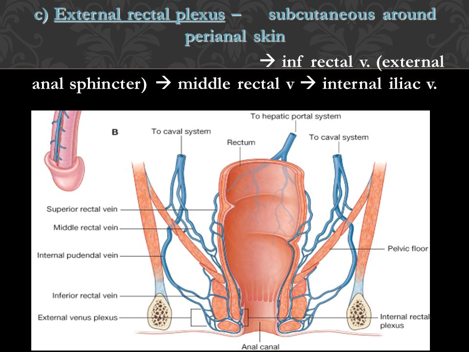 c) External rectal plexus – subcutaneous around perianal skin  inf rectal v.