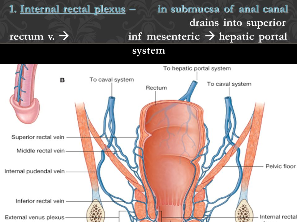 1. Internal rectal plexus –. in submucsa of anal canal