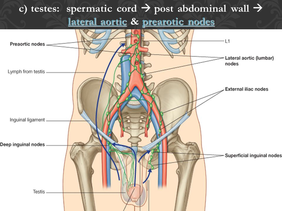 c) testes: spermatic cord  post abdominal wall  lateral aortic & prearotic nodes