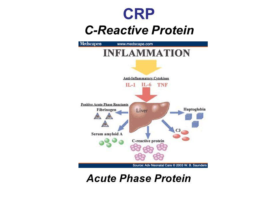 CRP C-Reactive Protein