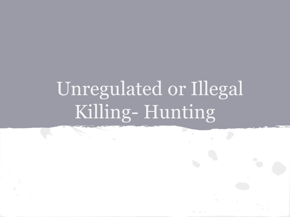 Unregulated or Illegal Killing- Hunting