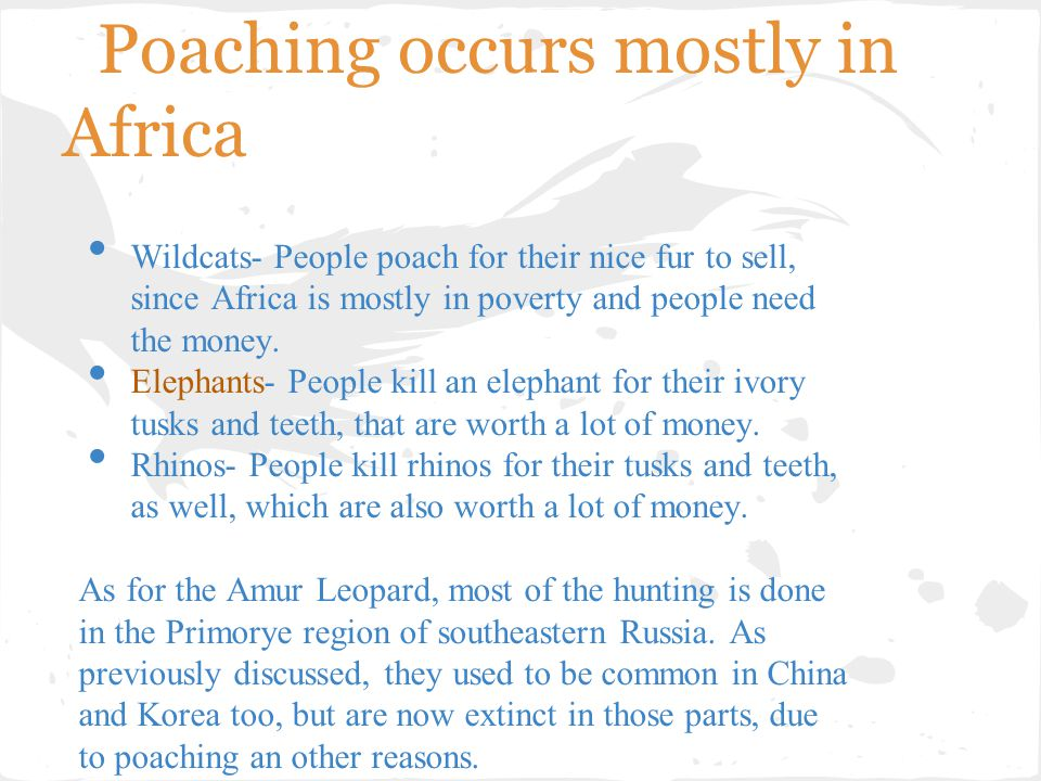 Poaching occurs mostly in Africa