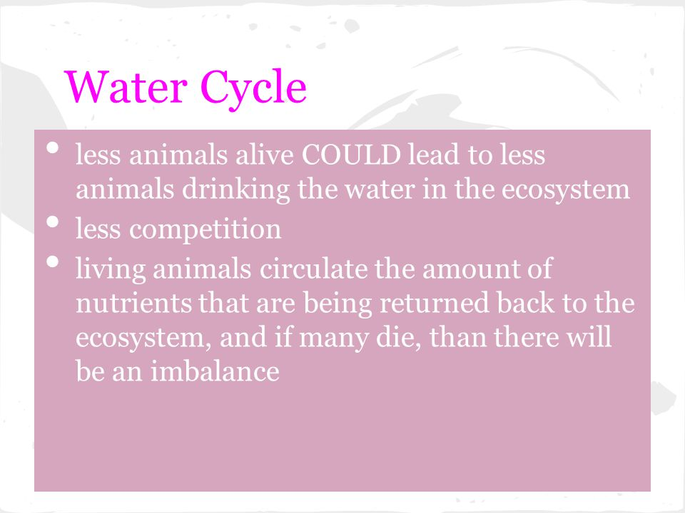 Water Cycle less animals alive COULD lead to less animals drinking the water in the ecosystem. less competition.