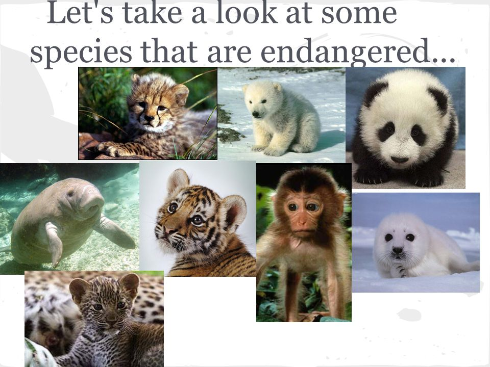 Let s take a look at some species that are endangered...